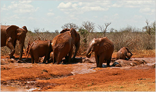 Tsavo Ost Nationalpark